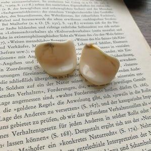 white shell pierce