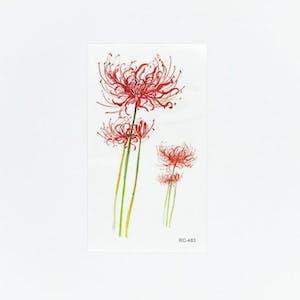 Red magic lily[ID: ssl0536]