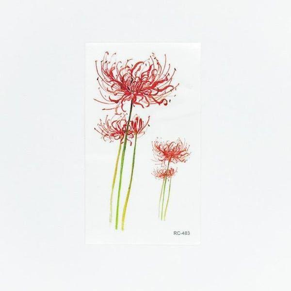 Red magic lily[ID: ssl0536]の画像1枚目